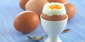 اضرار البيض