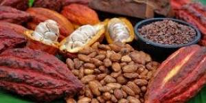 فوائد الكاكاو للحصول على الطاقة والحيوية للجسم