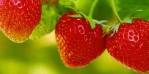 القيمة الغذائية للفراولة